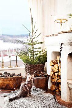 EN RIKTIG DRÖMJUL I HUSET VID SILJAN: Eva har inte bara en, utan flera, granar i huset. Orangeriet har utsikt över sjön. Den gamla korgen från 1800-talet användes förr att lägga barn i. Numera samlar Eva kottar i den. Mässingsljusstakarna är köpta på auktion   Ett julreportage i Hus & Hem via Bettina Holst