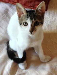 Estoy poniendo esta carita porque necesitamos...  - ¡voluntarios para alimentar a los gatos que viven en el Parque! Disponibilidad: 1 día por semana / 2 ó 3 hs. Te brindamos el alimento, entrenamiento y asesoramiento.  - ¡voluntarios con estudios veterinarios! Para diagnosticar, ayudar a tratar y planificar el mejor cuidado veterinario de nuestros gatos en el Botánico y en hogares de tránsito hasta ser adoptados.  ¡Animate! Escribí a voluntarios.botanico [@] gmail.com