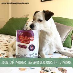 Te recomendamos estos snacks para que protejas las articulaciones de tu perro.  #lifestyle #chuchesparaperros #articulacionesyperros #perros #vidaconperros Snack, Physical Activities, I Will Protect You, Dogs
