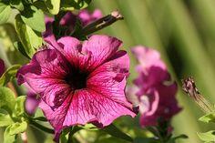 ¿Qué plantas colgantes de exterior pueden soportar el sol pleno y el calor? | eHow en Español