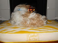 Passes the pooch comfort test! #dog, #dogbed