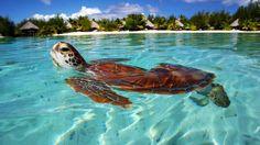 Bota Bora, French Polynesia...