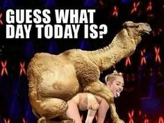 Hump Day Camel Miley Cyrus Hump Day quote ...