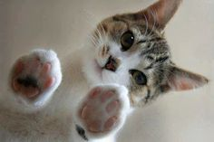 Cats leave paw prints on your heart.