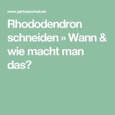 Rhododendron schneiden » Wann & wie macht man das?