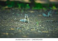 Stock Photo and Image Portfolio by ZAPPL | Shutterstock Royalty Free Images, Royalty Free Stock Photos, Stock Footage, Squirrel, Photo Editing, National Parks, Illustration, Artist, Animals