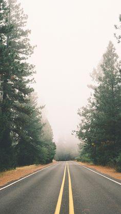 Foggy Autumn Pine Road iPhone 6 Plus HD Wallpaper