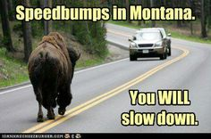 Speed bumps in Montana!