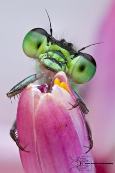 Check out these remarkable photos by Colin Hutton. Of this series, he says: 'Many people see insects as creepy and revolting if they even notice them at all, but viewing these tiny creatures through a macro lens presents them in an entirely new light. Cool Insects, Bugs And Insects, Beautiful Creatures, Animals Beautiful, Cute Animals, Foto Macro, Mantis Religiosa, Insect Photos, Fotografia Macro