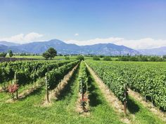 Top Franciacorta Wines | Everything you need to know about Franciacorta | By @TheFermtdFruit