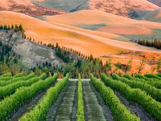 The wine region of Canterbury, New Zealand