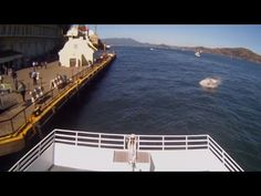 White Shark Attack in SF -  White Shark Attack in Alcatraz 10.10.2015 - ...