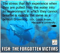 Fish: The forgotten victims. YES fish are animals. I don't eat meat and yes. fish is MEAT. I don't eat fish. Reasons To Be Vegan, Vegan Quotes, Vegan Memes, Vegetarian Quotes, How To Become Vegan, Why Vegan, Stop Animal Cruelty, Vegan Animals, Animal Welfare