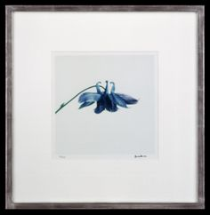 Lord Snowdon | Columbine | Limited Edition Photograph Unique Flowers, King George, Boudoir, Small Spaces, Photographs, Lord, Artist, Prints, Image