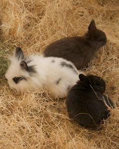 Bunnies #cute #animals