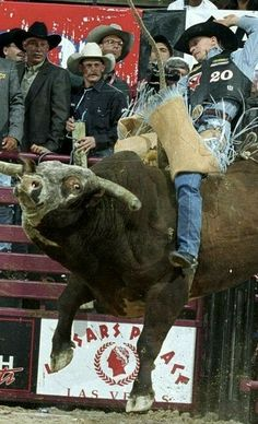 Ty Murray, Rodeo Life, Cowboy Up, Bull Riding, Action, Big, Animals, Cowboys, Group Action