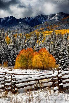 Fall in Colorado Le Colorado, Colorado Mountains, Rocky Mountains, Colorado Springs, Beautiful World, Beautiful Places, Autumn Scenes, Quelques Photos, Fall Pictures