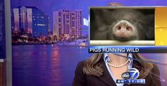 Погледнете ги најсмешните моменти за време на вестите во 2014 година