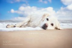 at the beach by GabiStickler #animals #animal #pet #pets #animales #animallovers #photooftheday #amazing #picoftheday