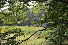 Norris Reservation in Massachusetts l Gardenista