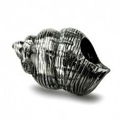 Conch Seashell
