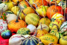 Pumpkin Festival in Kikinda