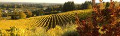 Bergstrom Winery, Oregon