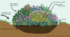 Beautiful and eco-friendly rain gardens