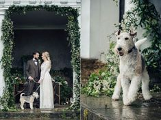 Bride & Groom with their pet dog at their wedding. At dog friendly wedding venue 'Naturally Norwood' at Norwood Park in Southwell, Nottingham Photo by Sarah Vivienne Photography, UK Luxe Wedding, Rustic Wedding, Wedding Venues, Wedding Ideas, Norwood Park, Photography Uk, Pet Dogs, Pets, Nottingham