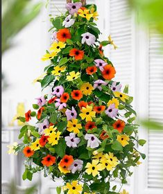 Climbing Flowers, Climbing Vines, Flower Seeds, Flower Pots, Flower Tree, Black Eyed Susan Vine, Herbaceous Perennials, Deco Floral, Hanging Pots