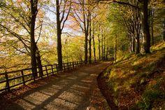 """Walk the romantic paths like """"Fjellveien"""" or """"Fløyveien"""" in Bergen, Norway."""