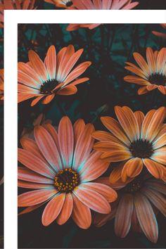 Floral Wallpaper Iphone, Spring Wallpaper, Flower Wallpaper, Mobile Wallpaper, Wallpaper Backgrounds, Flower Backgrounds, Spring Aesthetic, Orange Aesthetic, Flower Aesthetic