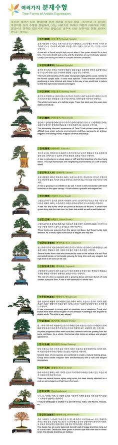 Each Bonsai style explained