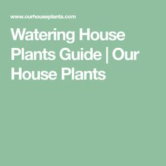 Watering House Plants Guide | Our House Plants