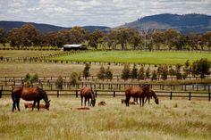 #Horse #Property #Australia on #Pinterest http://buff.ly/12GRIvn #HorsePropertyAU