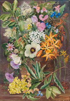 375. Flowers of St. John's in Pondo Basket. - Marianne North - Kew Gardens Botanical Prints - Kew Botanical Prints