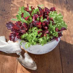 Gardening Tips for Growing Lettuce: varieties to try, sowing, seeds, sun, soil, feeding & watering. Lettuces are perfect for small shallow containers. Learn how easy it is to plant one: http://bit.ly/Jy1K8J | The Micro Gardener