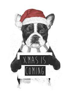 'X-Mas is Boring', French Bulldog illustration