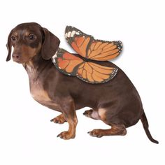 Your dog will lift your spirits in the Monarch Butterfly Wings Dog Costume! - Costume includes wings - Made out of Polyester - Great for pictures Why We Love It: Your pup will like to show off the swe