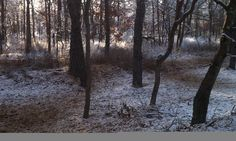 Sunrise in a Snow Dusted NJ Pine Barrens Trail