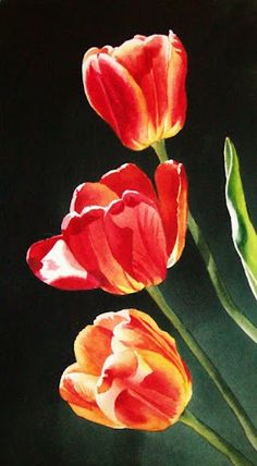 Tulips - Watercolour Painting By Jacqueline Gnott Tulip Painting, Watercolour Painting, Watercolor Flowers, Watercolors, Floral Paintings, Watercolor Artists, Indian Paintings, Watercolor Portraits, Watercolor Landscape