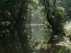 High Forest, Faerûn