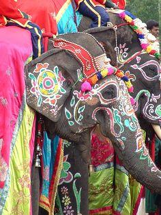 Painted Indian Elephants