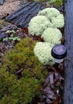 how to make moss and lichen garden- a great fairy garden back drop