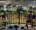 Gomo Gomo Game Lodge - accommodation in Timbavati Nature Reserve, Kruger National Park, South Africa