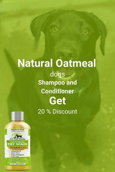 Our Oatmeal Dog Shampoo And Conditioner is recommended by Vets and Specially formulated for pets with allergies to food, grass and flea bites. Can be used for dogs, cats, ferrets and rabbits.. There isNO ALCOHOL, NO SULPHATES, NO ADDED COLORS & NO HARSH CHEMICALS.#homemadeshampoo #shampoo #dogs Homemade Dog Shampoo, Natural Dog Shampoo, Shampoo And Conditioner, Healthy Hair, Allergies, It Works, Dog Cat, Vitamins, Alcohol