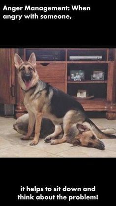 GSD~ Love this... I bet we've ALL wished that we could do this at one time, or another!
