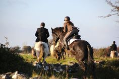 Midnight hunting November 2017. #loveirishhorses #horseforsale Call James +353833168366 Horses For Sale, Show Jumping, Cob, Charity, Irish, Hunting, November, Couple Photos, Animals