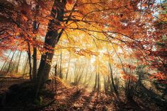 Explore the Amazing Nature collection - the favourite images chosen by on DeviantArt. Fine Art Photography, Nature Photography, Great Works Of Art, Autumn Forest, Nature Animals, Amazing Nature, Online Art Gallery, Mother Earth, Pretty Pictures