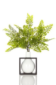 "Fern in White Box Vase - 15"" x 12"" by Spring: Designer Floral Arrangements on @HauteLook"